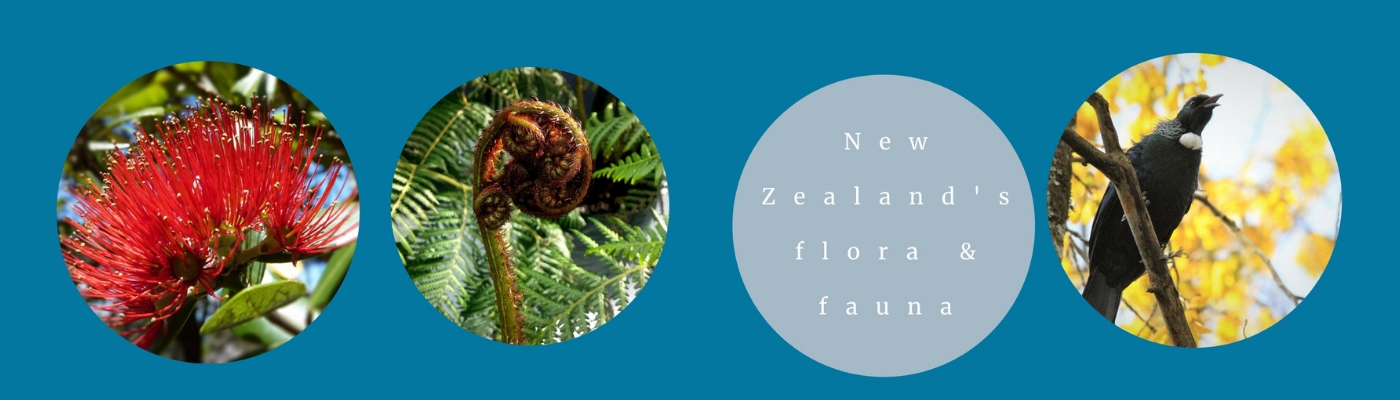Celebrating the flora & fauna of New Zealand