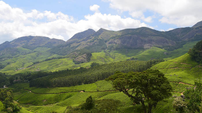 Munnar Southern India Tea Plantation