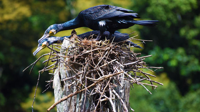 Bird Nesting in Periyar National Park