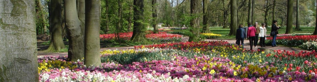 Keukenhof Gardens Netherlands Flowers Spring